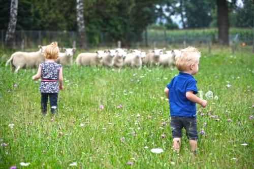 Jongen en meisje met schapen